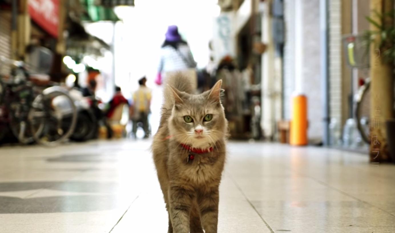"""Japoneses crean el Street View en """"modo gato"""""""
