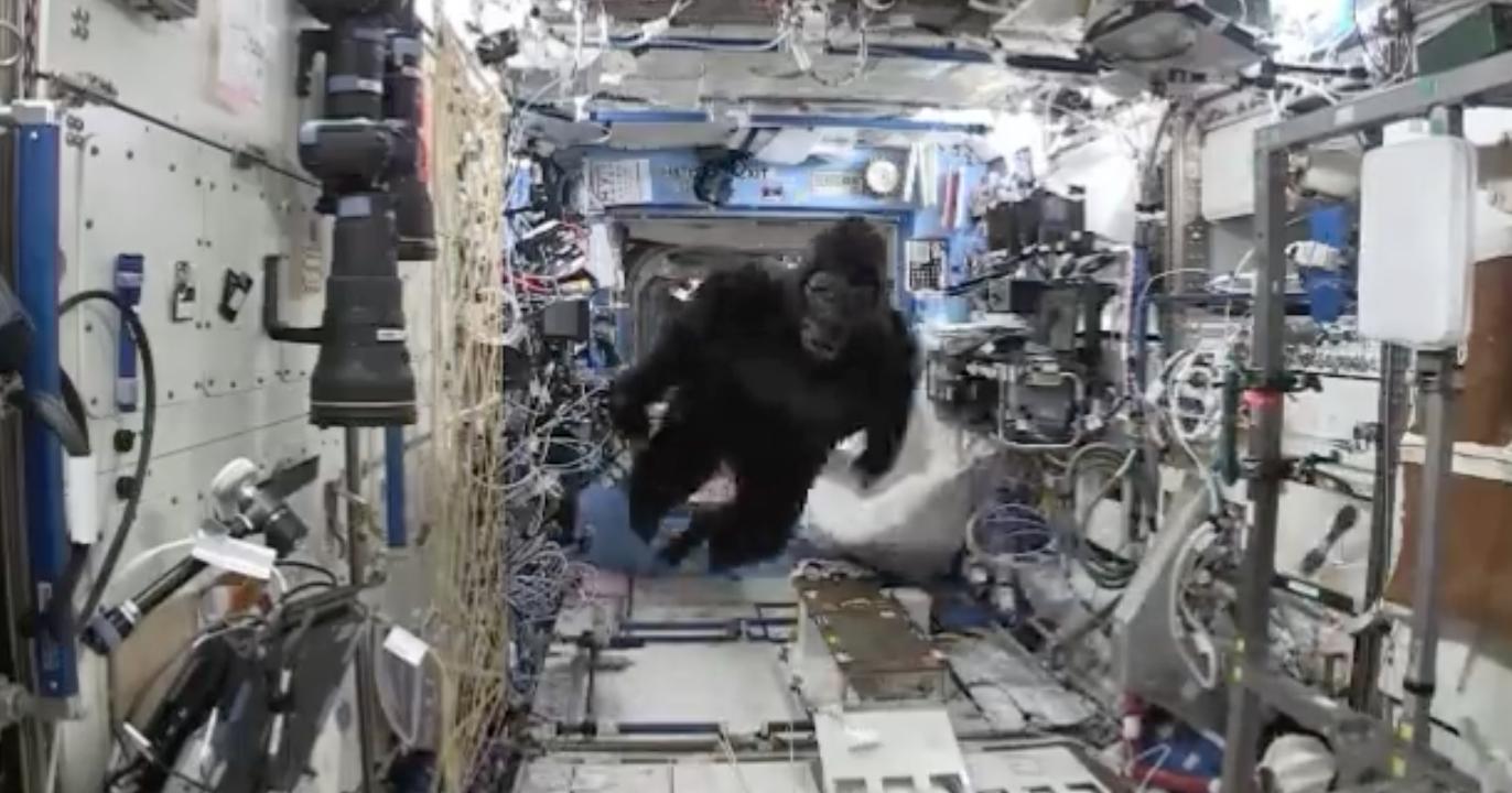 Un gorila en la Estación Espacial Internacional