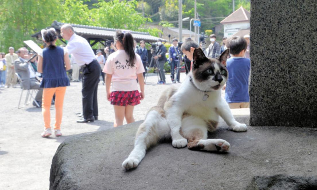 Nombran a un gato como embajador del turismo de un pueblo japonés